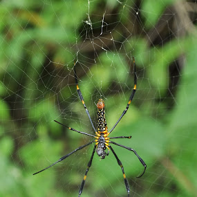 by Rahul Aryan Roy - Animals Insects & Spiders