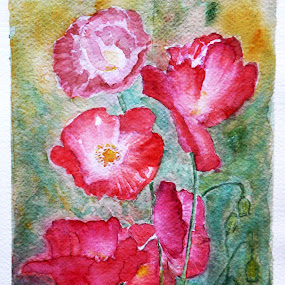 Poppies II by Jasna Dragun - Painting All Painting ( watercolor, poppies, transparent, colorism, impressionism )