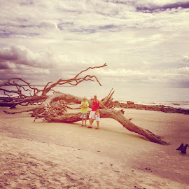 Driftwood beach by Heather Brandenburg - Instagram & Mobile Instagram