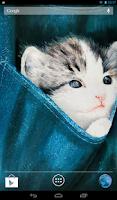 Screenshot of Kitten Slideshow