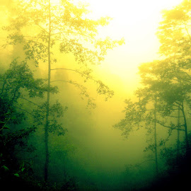 Hazy Forest by Archit Sharma - Landscapes Forests ( haze, affection, plants, trees, sunshine, forest, yellow, sunrise, plantation, sun rays )