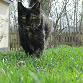 Finally Spring weather by Claire Underwood - Animals - Cats Portraits