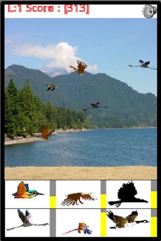 Catch the Birds