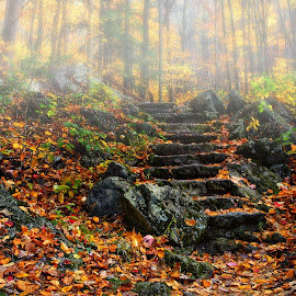 Step into the Forest by James Gramm - Nature Up Close Rock & Stone ( color, fog, fall, trees, stone, rocks, path, nature, landscape )