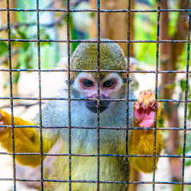 Colorful monkey by Amro Alnajar - Animals Other ( animals, zoo, colorful, nikon d, monkey )