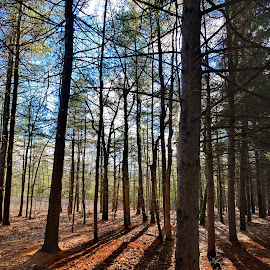 by Jeff Fox - Landscapes Forests