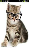 Screenshot of Crazy Hipster Cat