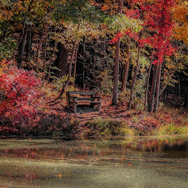 by Larry Belt - Landscapes Forests