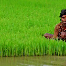 A Man Working Hard To Gets His Capital by Sam Billu - Nature Up Close Leaves & Grasses (  )