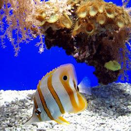 Aquarium by João Ascenso - Animals Sea Creatures