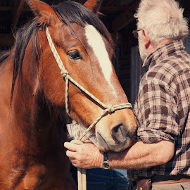 Hold your horse by Michelle du Plooy - Animals Horses ( cowboy, equine, bay, horse, man )