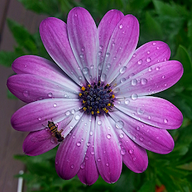 by Dipali S - Instagram & Mobile Android ( water, android, flora, drops, daisy, insect, flower,  )