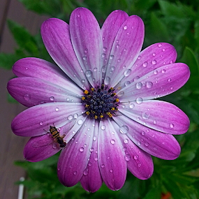 by Dipali S - Instagram & Mobile Android ( water, android, flora, drops, daisy, insect, flower )