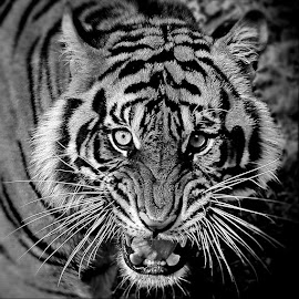 by DODY KUSUMA  - Black & White Animals