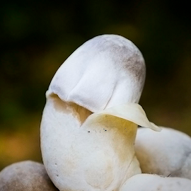 by Ronnel Masangkay - Nature Up Close Mushrooms & Fungi