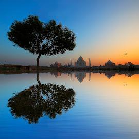Symbol of Love by Ravikanth Kurma - Digital Art Places ( taj, reflection, valentines day, fine art, lovebirds, valentine, dusk, love, tree, blue, mahal, ripples, taj mahal )
