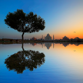 Symbol of Love by Ravikanth Kurma - Digital Art Places ( taj, reflection, valentines day, fine art, lovebirds, valentine, dusk, love, tree, blue, mahal, ripples, taj mahal )