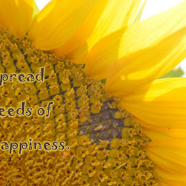 Spread Seeds of Happiness by Shannon Maltbie-Davis - Typography Captioned Photos ( spread seeds of happiness, petals, sunflower, seeds, yellow, flower )