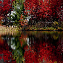 A time and place to reflect. by Michael Haagen - Landscapes Forests ( water, colors, fall, reflections, lake,  )