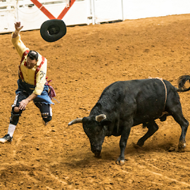 Bullfighter goes for a ride by Timothy Bergman - Sports & Fitness Rodeo/Bull Riding ( hooked, cowboy, bullfighter, rodeo clown, rodeo )