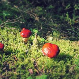 Smurfs' village by Roland Deroo - Nature Up Close Mushrooms & Fungi ( national park, canada, forest, sunrise, mushrooms )
