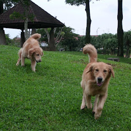 The happy moment for us~ <3 by Ziyi Bnn - Animals - Dogs Running ( playing, dogs, happy dog, running, green grass )