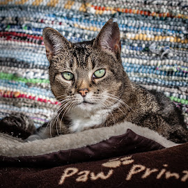 Mis Paws by Ozlem Mehmet - Animals - Cats Portraits ( neko, cat, kedi, chat, feline, kitty )