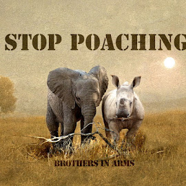 Stop Poaching - Brothers in Arms by Bjørn Borge-Lunde - Typography Captioned Photos ( animals, nature, poaching, elephant, wildlife, africa, rhino )