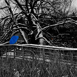Lady with a blue umbrella by Steve Cooper - Artistic Objects Clothing & Accessories ( swampland, blue, arboreals, umbrella, boardwalk )