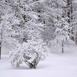 Winter's Blanket by Karen Hardman - Landscapes Weather
