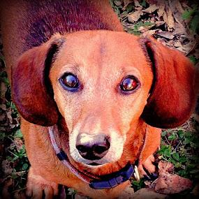 My boy buster :) by Kisha Webb - Animals Other