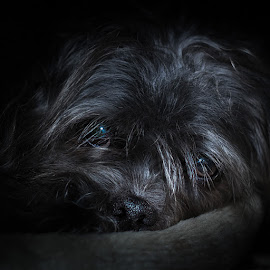 My dog Steven by Lee Underwood - Animals - Dogs Portraits ( shaggy, scruffy, dog portrait, cute, dog, mutt )