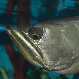 Keep this Nikon flashing bomb away from me!! by Prasoon Verma - Animals Fish