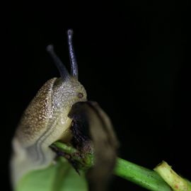 Night Trial by Upul.C. Dayawansa - Animals Other ( macro, wildlife, insects, night shoot, closeup,  )