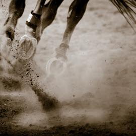 Galloping by Bruce Lindman - Animals Horses ( mammals, horse, dirt, running, hooves )
