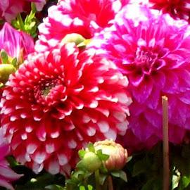 Seasonal beauties..... by Sanjit Sinha - Nature Up Close Gardens & Produce