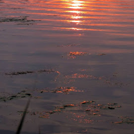 Sun's reflection in the water by Susanne Swayze - Nature Up Close Water