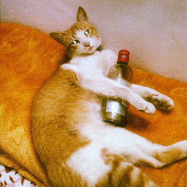 Drunk by Drishya Yonzon - Animals - Cats Playing ( cat, sweet )