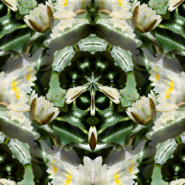 WL 1 Seamless by Tina Dare - Digital Art Abstract ( abstract, seamless, patterns, nature, designs, manipulated, distorted, digital art, flowers, water lilies, shapes )