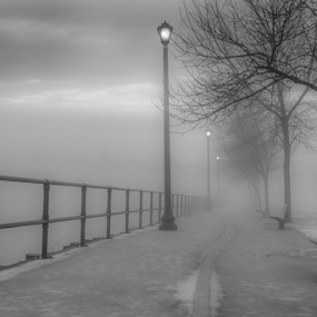 by Blaine Stauffer - Black & White Landscapes ( foggy, park, fog, park bench, canal )