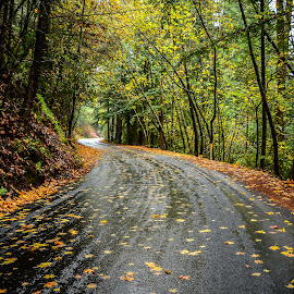 Sugarloaf Awaits by Justin Murazzo - Transportation Roads ( mountain, drop, yellow, leaves, preserve, ridge, nature, tree, sugarloaf, autumn, drive, alone, light, pavement, hill, conifer, wind, orange, winding, windy, california, journey, overcast, sunlight, coastal, sonoma, uphill, northern, rosa, county, serene, day, outside, west, calm, range, america, deciduous, states, road, beauty, coast, sun, santa, happy, wet, rain, water, united, peaceful, park, afternoon, green, beautiful, scenic, red, color, fall, scenery, daylight, out,  )