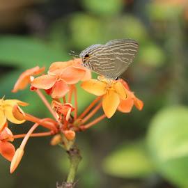 by Thapasya Vijayan - Nature Up Close Gardens & Produce