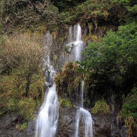 Roadside Waterfall by Ken Miller - Nature Up Close Water ( water, oregon, waterfall, landscape photography, costal road, roadside, travel photography )