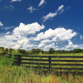 by Mike Dinkens - Landscapes Prairies, Meadows & Fields