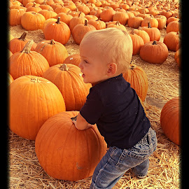 Pumpkin patch  by Brandy McGuire - Novices Only Portraits & People