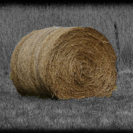 hay bale by Helly Maree - Nature Up Close Leaves & Grasses ( fence, grass, bale, hay, ground )