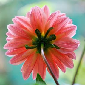 by B Thottoli - Nature Up Close Flowers - 2011-2013 (  )
