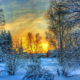 -29 degrees by Ewa Nilsson - Landscapes Weather ( winter cold snow sunrise trees lapland sweden )