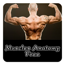 Muscles Anatomy Free