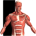 Visual Anatomy 2 APK Descargar